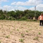 Prefeitura realiza cortes de terras e doa sementes de feijão e arroz a 82 famílias do assentamento Pirangi.