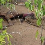 Corpo é encontrado em estado de decomposição em estrada carroçal de Pedro Avelino.